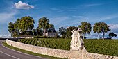 Chateau Latour, vineyards in Medoc, Bordeaux, Gironde, Aquitaine, France, Europe