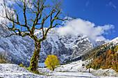 Herbstlich verfärbte Ahornbäume auf verschneitem Großen Ahornboden, Großer Ahornboden, Eng, Karwendel, Naturpark Karwendel, Tirol, Österreich