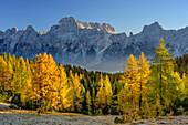 Herbstlich verfärbte Lärchenwald mit Sorapiss-Gruppe, Monte Pelmo, Dolomiten, UNESCO Welterbe Dolomiten, Venetien, Italien