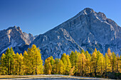 Herbstlich verfärbte Lärchen vor Antelao, Monte Pelmo, Dolomiten, UNESCO Welterbe Dolomiten, Venetien, Italien