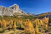 Tofana mit herbstlich verfärbten Lärchen, Dolomiten, UNESCO Welterbe Dolomiten, Venetien, Italien