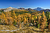 Herbstlich verfärbten Lärchen mit Averau, Monte Cernera, Monte Pore und Civetta, Dolomiten, UNESCO Welterbe Dolomiten, Venetien, Italien