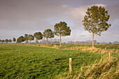Rain clouds over pasture with ash trees in evening light, Gödens, Sande, Friesland District, Lower Saxony, Germany, Europe