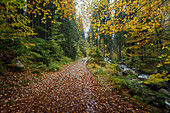 Forest path at  river Warm Bode, Braunlage, Harz National Park, Lower Saxony, Germany, Europe