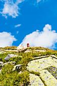 A chicken walks on a mountain pasture in the Zillertal Alps, Ginzling, Zillertal, Tirol, Austria