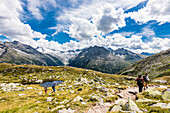 Hikers in front of the panorama of the Zillertal Alps above the reservoir Schlegeisspeicher, Ginzling, Zillertal, Tirol, Austria