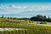 Apple plantation, orchard, Wasserburg, Lake Constance, in the back the Swiss Alps, Allgaeu, Bavaria, Germany