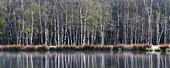 Kaltenhofer Moor (Hochmoor, Naturschutzgebiet), Dänischer Wohld, Rendsburg-Eckernförde, Schleswig-Holstein, Deutschland
