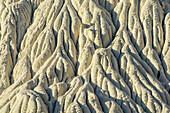 White rock erosion at Wahweap River, Grand Staircase-Escalante National Monument, Utah, USA