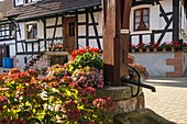 Half-timbered houses with flower decoration and old well of Hunspach in the autumn, small village in Northern Alsace, North Vosges, France, member of the most beautiful villages of France, department Bas-Rhin.