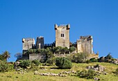 The impressive eighth-century castle of Almodovar del Rio perches high above the Guadalquivir river valley. In the foreground a flock of sheep. Cordoba province, Andalusia, Spain.