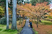 Autumn leaves at Sanzen-in temple, O'hara, Kyoto Prefecture, Japan.