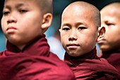 Mahagandayon Monastery, Amarapura, Myanmar, South East Asia. Detail of young monk in a row for the ritual of lunch.