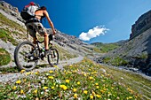 A biker in the wild Valle della Forcola in Alta Valtellina bloming with flowers, Italy.