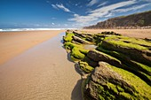 Natural Park of the Dunes of Liencres, Liencres, Cantabria, Spain.