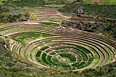 Archaeological site of Moray in the Sacred Valley near Cuzco. Moray - is the name of the Incan ruins near the town of Maras, Peru that sits six hundred meters above Urubamba and the Sacred Valley of the Incas. Moray is the name of the Incan agricultural l