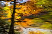 Moved tree, abstract, autumn, Bavaria, Germany, Europe