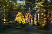 moving forest, moved trees, abstract, autumn, Bavaria, Germany, Europe
