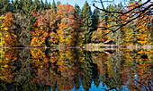 Landscape, lake with colourful trees in fall, autumn, spruce, beech, Upper Bavaria, Germany, Europe