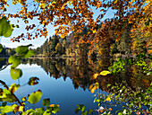 autumn colours at Hochschlossweiher pond near Pähl, beech trees, Upper Bavaria, Germany, Europe