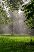 Summer rain in the Englischer Garten, Munich, Upper Bavaria, Germany