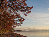 View along the eastern shore of lake Starnberg to the Alps in a southerly direction in late autumn, Ambach, Upper Bavaria, Germany