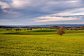 View over Autumn meadow to St. Johann Baptist in Holzhausen in the direction of Starnberger See, Upper Bavaria, Germany