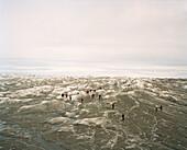 GREENLAND, Kangerlussuaq, Kangerlussuaq Ice Cap, tourists walking on ice cap