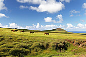 EASTER ISLAND, CHILE, Isla de Pascua, Rapa Nui, hikers explore around the green lush hills leading to Maunga Terevaka, the highest point on the Island, 511 meters