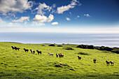 USA, Hawaii, The Big Island, mountain bike ride on pu'uhue rd trail off of road 250 South of Hapuna