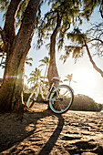 HAWAII, Oahu, North Shore, a bike resting on a tree at Pipeline
