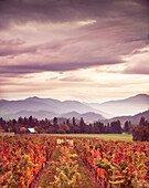 USA, Oregon, Medford, Schmidt Family Vineyards is located in the beautiful Applegate Valley and is owned by Judy and Cal Schmidt, the winery consists of country charm, beautiful gardens and fine wines