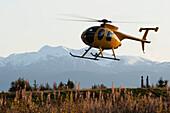 Hughes 500 Helicopter Landing At Homer, Southcentral Alaska, USA