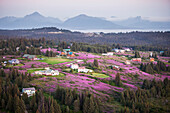 Aerial View Of Diamond Ridge And Fields Of Fireweed With The Kenai Mountains In The Background, Southcentral Alaska, USA