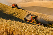 Combines Harvest Grain In The Palouse Region Of Eastern Washington; Washington, United States Of America