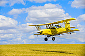 Crop Duster Spraying Herbicide On Fields Of Garbanzo Beans In The Palouse Region Of Eastern Washington; Washington, United States Of America