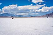 Woman walks her dog on Bonneville Salt Flats; Wendover, Utah, United States of America