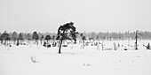 A Desolate Landscape Of A Snow-Covered Field With Trees Under A Cloudy Sky; Arjeplog, Norrbotten County, Sweden