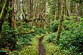 Lush Foliage In A Temperate Rainforest, Cape Scott Provincial Park; British Columbia, Canada