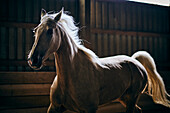 A Backlit Horse Galloping In A Stable; Canada