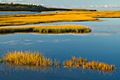 Coastal Marsh And Woods; Framboise, Cape Breton Island, Nova Scotia, Canada