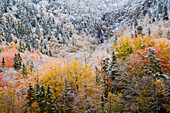 Waterfall And Autumn Colours In Snow On Sugarloaf Mountain, A Protected Crown Wilderness Area Along The Northeast Margaree River At Big Intervale; Cape Breton Island, Nova Scotia, Canada
