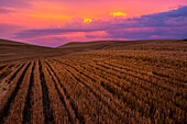 Golden Crops On A Hilly Landscape At Sunrise With A Dramatic Colourful Sky; Washington, United States Of America