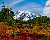 Mount Rainier And An Autumn Coloured Meadow, Mount Rainier National Park; Washington, United States Of America