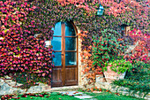 A Colourful Autumn Ivy Almost Completely Covers A Private Tuscany House; Tuscany, Italy