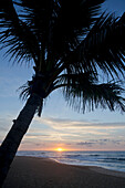A coconut palm tree silhouette on the beach at sunrise; Honolulu, Oahu, Hawaii, United States of America