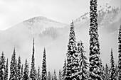 A winter scene with snow covered coniferous trees and forests on the mountains in fog, Whitewater Ski Resort; Nelson, British Columbia, Canada