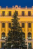 Christmas tree in front of the Schönbrunn Castle, 14. Hietzing district, Vienna, Austria