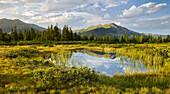Seven Moser High Moor Nature Reserve, Kitzbühel Alps, hochkrimml, gerlosplatte, Pinzgau, Salzburg, Austria