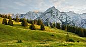 Huder Bank Tip, walderalm, Grace forest, Karwendel, Tyrol, Austria